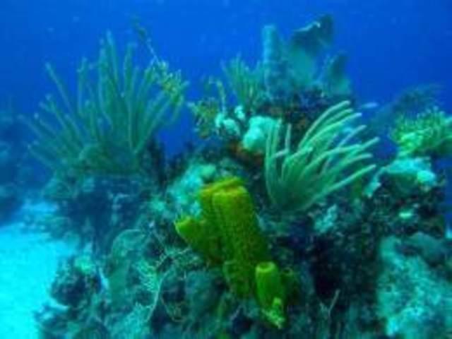 xurdiron as primeiras algas unicelulares.