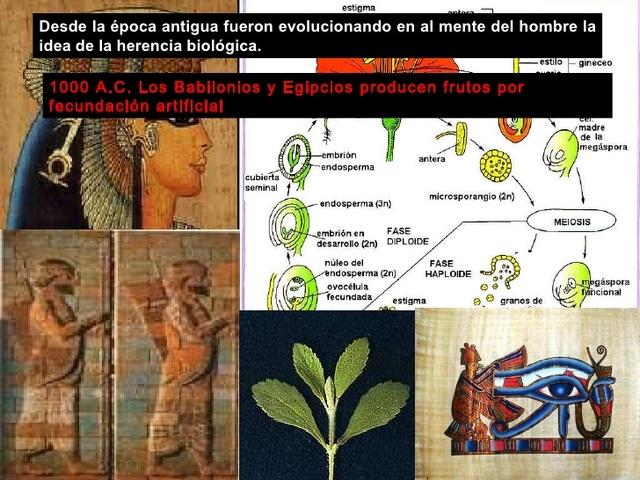Babilonios y egipcios