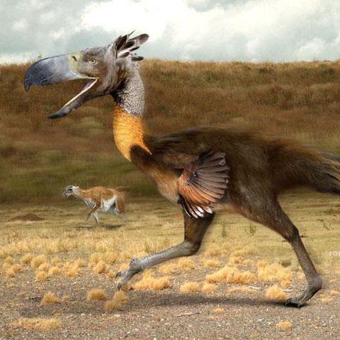 Fósil del mayor ave conocida