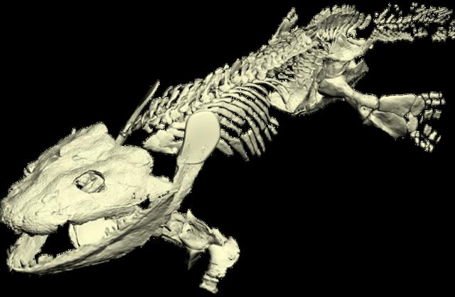 Primeros vertebrados