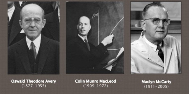 Oswald Theodore Avery, Colin McLeod y Maclyn McCarty