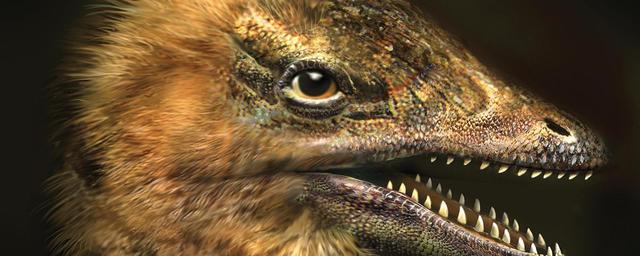 Genetics (Birds & Dinosaurs)