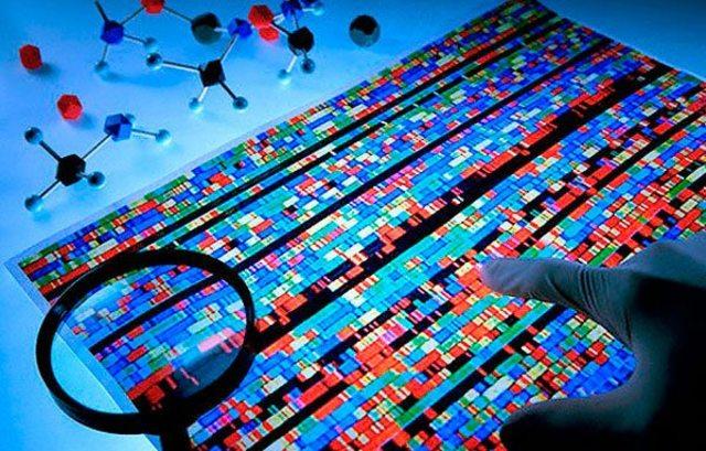 Los mapas genéticos demuestran la disposición lineal de los genes en los cromosomas