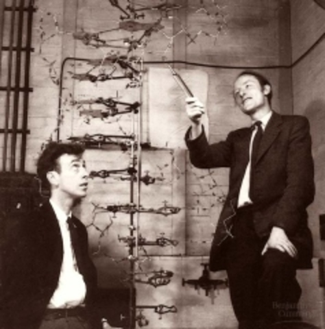 Francis Collins y Lap-Chee Tsui secuencian un gen humano por primera vez. El gen codifica la proteína CFTR, cuyo defecto causa fibrosis quística