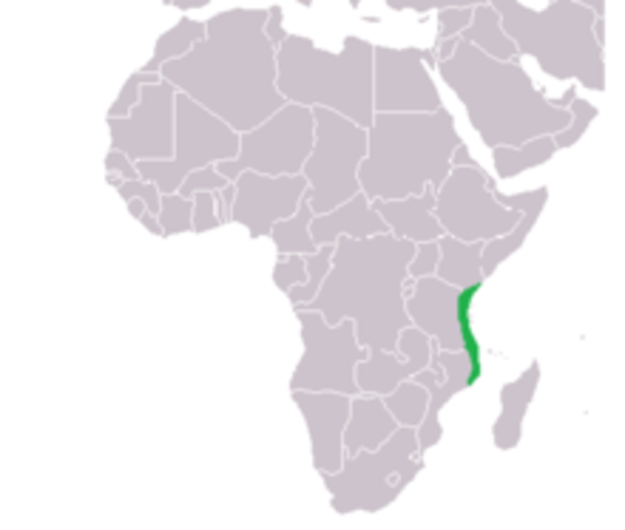 Swahili settlements develop along the coast of East Africa
