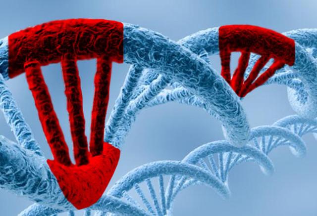 LA MUTACIÓN: CAMBIO EN LA SECUENCIA NUCLEOTÍDICA DE UN GEN