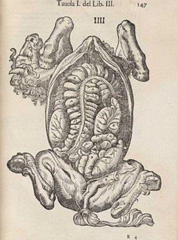Anatomia del Cavallo