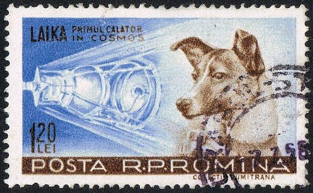 La cagnetta Laika nello spazio