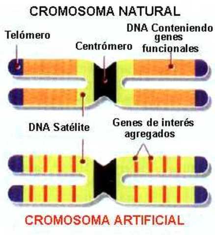 Cromosoma artificial