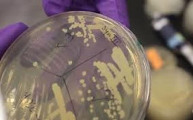 Cromosoma sintetico