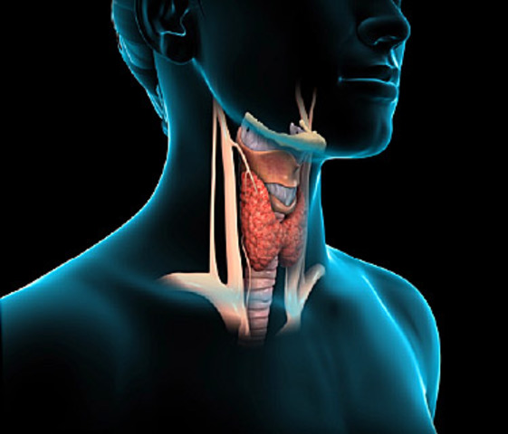 Fifties Topics of Concern: Thyroid Problems