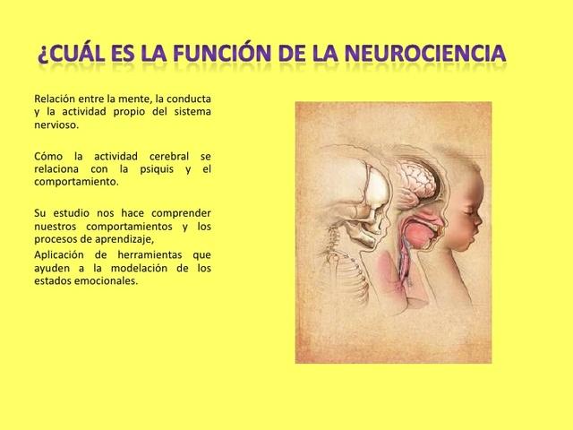 Miller. La Neurociencia del desarrollo