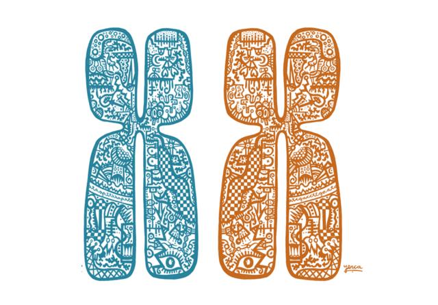 Implicación de Los Cromosomas En La Herencia