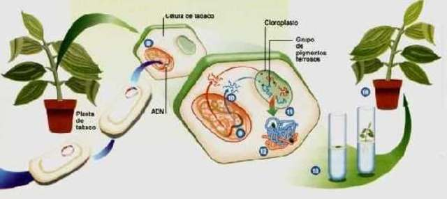 primer mapa completo del genoma de una planta
