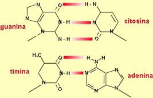 Nucleína