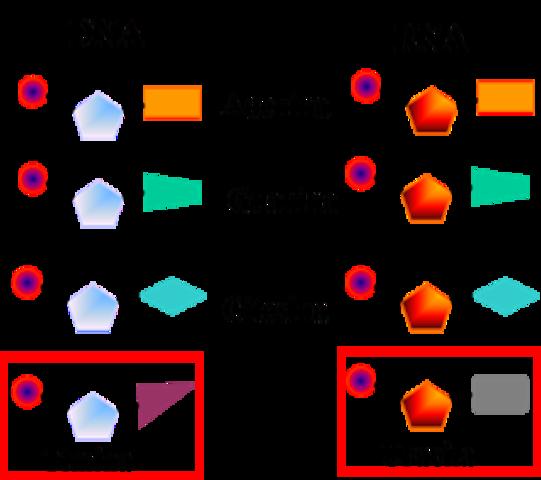 aislamiento de ADN