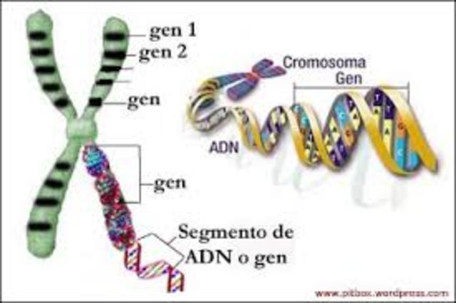 Células con ADN y ARN