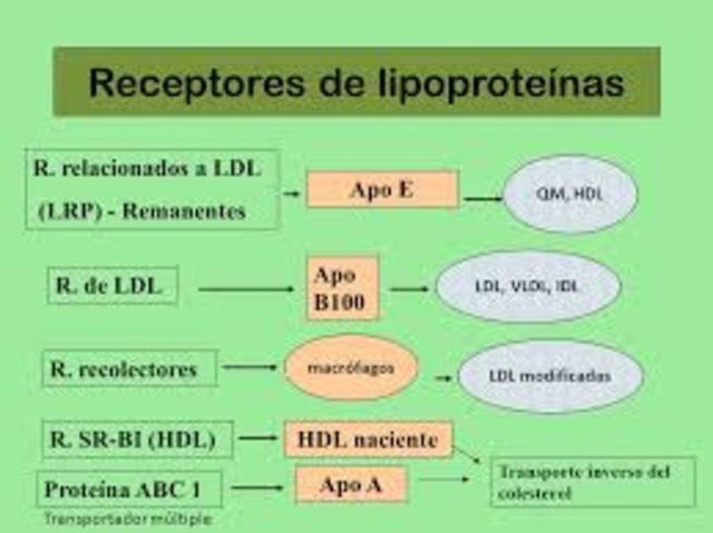 Regulación del metabolismo del colesterol