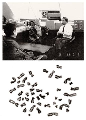 46 Cromosomas