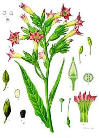cruces de especies en plantas