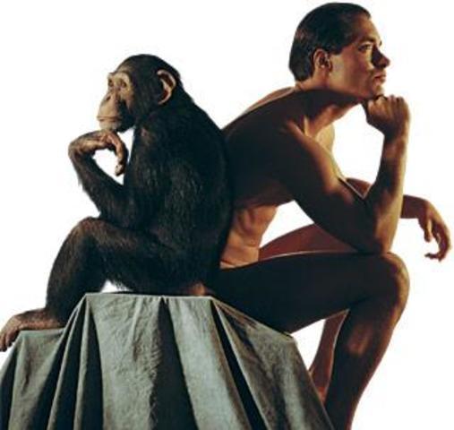 Humanos- Chimpancés