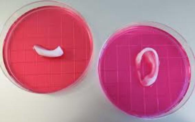 Una impresora 3D crea huesos, músculos y cartílagos