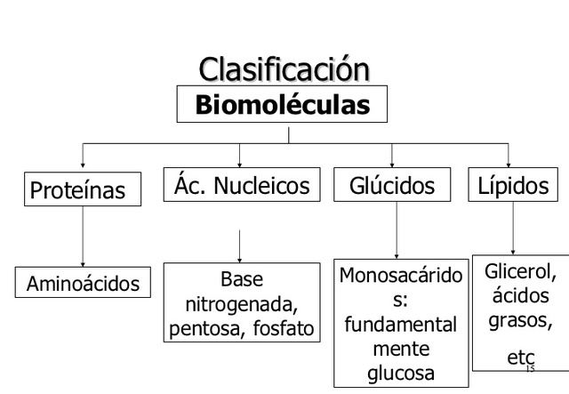 Clasificación de las biomoleculas