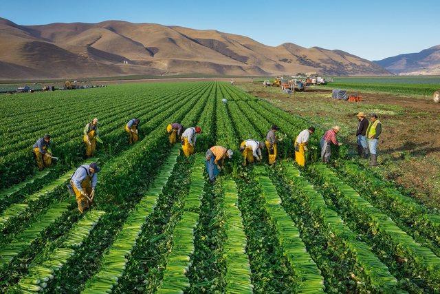 Enfoque y etapa de las políticas y programas de desarrollo rural en generación y transparencia de tecnología, la llamada revolución verde
