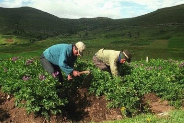 Proyecto desarrollo de pequeños productores agropecuarios