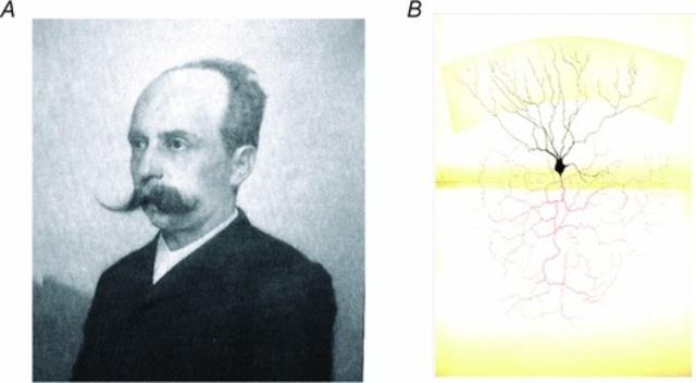 Camilo Golgi (1843-1926)