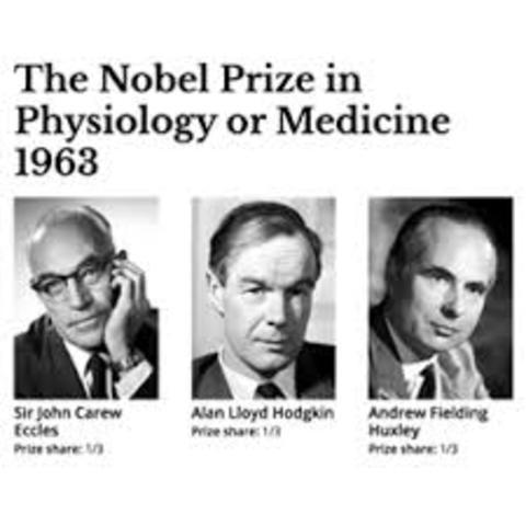 John Carew Eccles (1903-1997) Alan Lloyd Hodgkin (1914-1998) y Andrew Fielding Huxley (1917- )