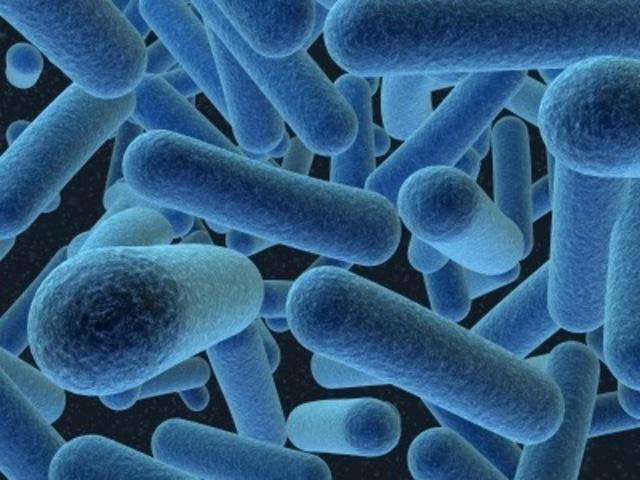 Archaeas, Bacterias y Eucaryas