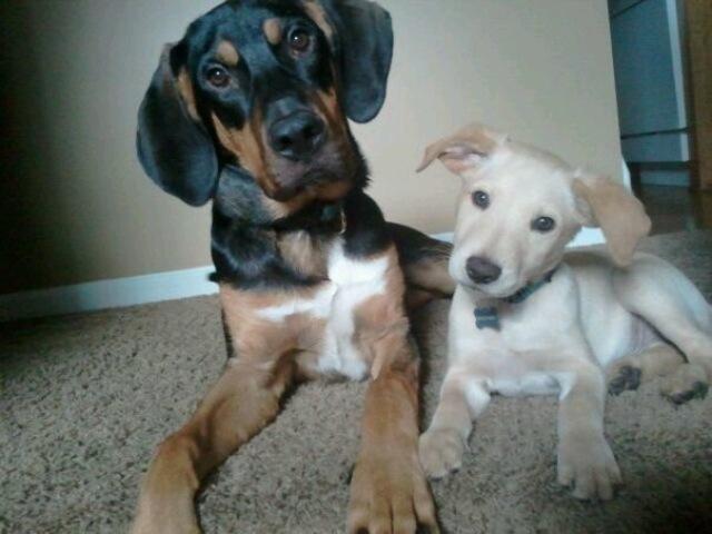 I Got My First Dogs