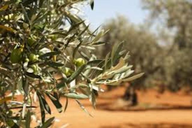 Descubrimiento de plantas Oleaginosas