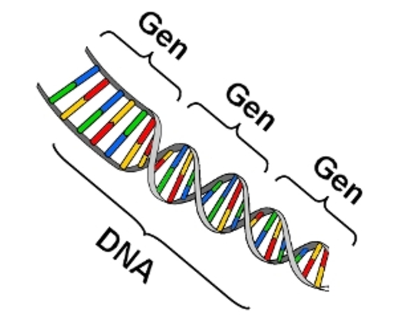 ¿Que es un gen?