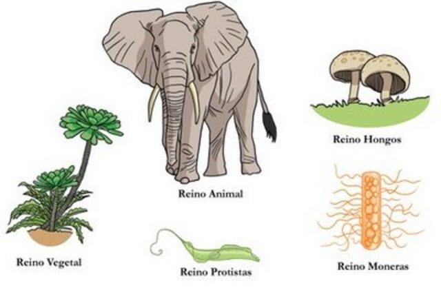 Clasificación de los seres vivos en 5 reinos