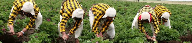 Se hace realidad el establecimiento del primer mecanismo financiero comunitario de la CAN, al aprobar el Reglamento del Fondo para el Desarrollo Rural y la Productividad Agropecuaria.