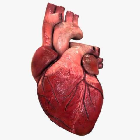 Reparación del musculo cardíaco