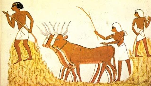 La agricultura y la domesticación de animales