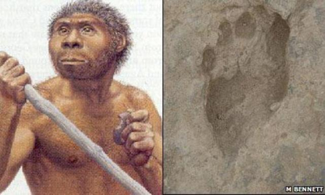 1.6 Million years ago - Homo Erectus