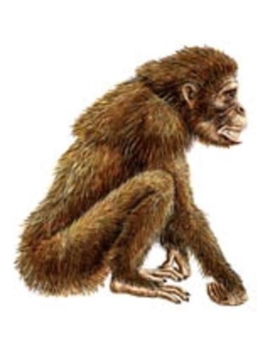 4 MIllion years ago - Australopithecine
