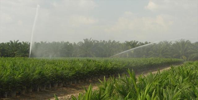 Desarrollo de la agricultura