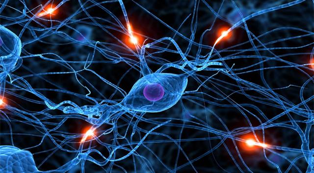 """Nacen las bases de las futuras """"redes neuronales"""""""