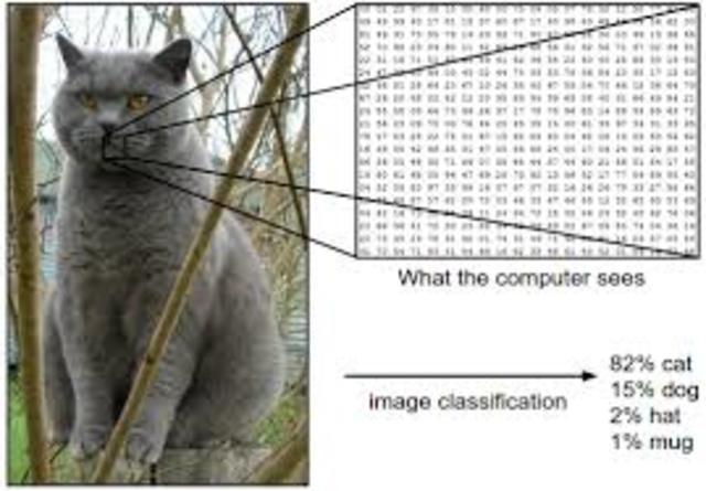 Red neuronal aprende a reconocer gatos con alta certeza