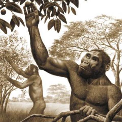 Prehistoria Gastronomía