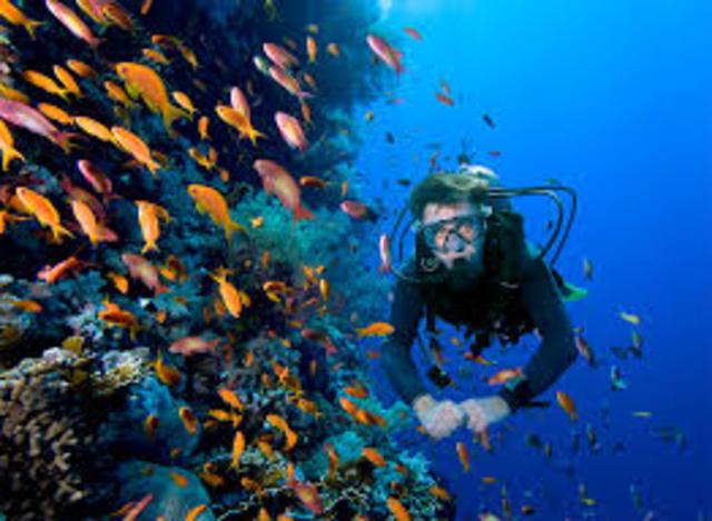 Reglamento para la prestación del servicio turístico de buceo.