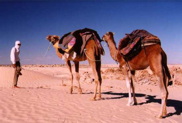 Muhammad Acts as Caravan Agent for Wealthy Tradeswoman, Khadija