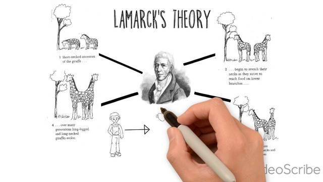Modern theory of evolution