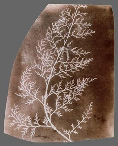 William Henry Fox Talbot, patentó el calotipo