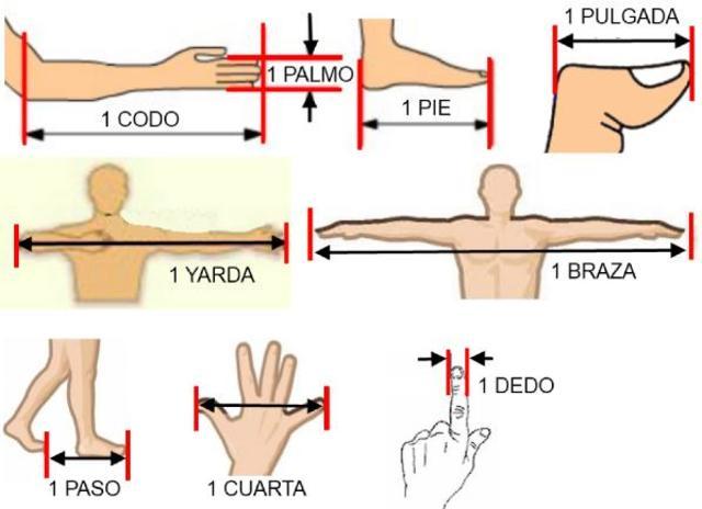 el cuerpo humano como medida
